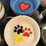 Paint Your Own Pet Bowl at Pinellas Ale Works